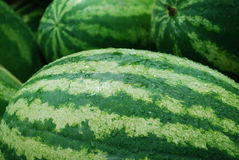 Fresh melons. Close-up of fresh melons at the stall Stock Photo