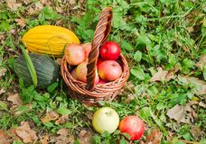Fresh melons and apples in basket in autumn Stock Photography