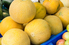 Fresh melons or cantalope at the market Royalty Free Stock Photos