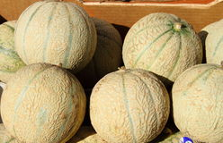 Fresh melons. Displayed in a greengrocery Stock Image