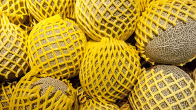 Fresh Melons wrapped with yellow mesh. Displayed in a group Royalty Free Stock Image