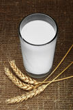 Fresh Milk. Milk with rye spikelets against sacking Royalty Free Stock Image