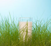 Fresh milk in the green grass Stock Image
