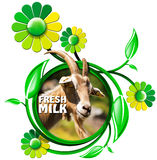 Fresh Milk - Symbol with Goat and Flowers Stock Photos