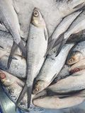 Fresh Milkfish. L sold in the Asian market Royalty Free Stock Images