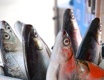 Fresh milkfish for sale Royalty Free Stock Photo