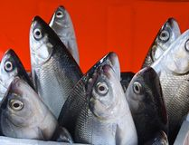 Fresh milkfish for sale Royalty Free Stock Photography