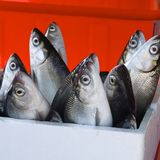 Fresh milkfish for sale Royalty Free Stock Photos