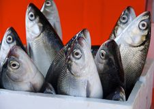 Fresh milkfish for sale Stock Photo