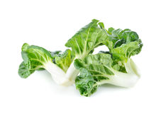 Fresh mini bok choy on white background Royalty Free Stock Photos
