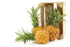 Fresh mini pineapple fruit in a wooden box Royalty Free Stock Image
