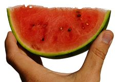 Fresh mini watermelon Citrullus Lanatus var. Lanatus slice held in left hand on white background Royalty Free Stock Image