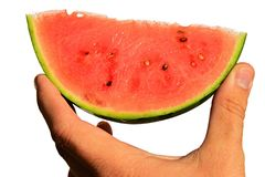 Fresh mini watermelon Citrullus Lanatus var. Lanatus slice held in left hand on white background Royalty Free Stock Photography