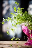 Fresh mint. Bunch of fresh mint in pink bowl royalty free stock images