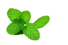 Fresh mint. Fresh green mint isolated on white Royalty Free Stock Image