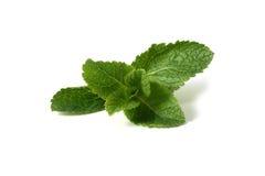 Fresh mint Stock Photography