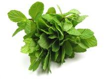 Fresh mint Stock Photos