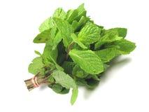 Fresh mint Stock Images