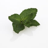 Fresh Mint Stock Images