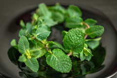 Fresh mint on black plate. Close up stock photography
