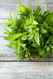 Fresh mint on the boards Stock Images