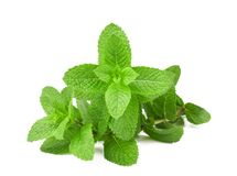 Fresh mint bunch royalty free stock photo