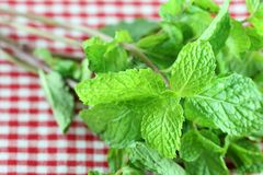 Fresh mint on on a Checkered table cloth Stock Photos