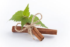Fresh mint and cinnamon sticks. Fresh mint and cinnamon sticks tied with twine on a white background Stock Photos