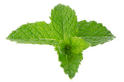 Fresh mint close up Stock Photography