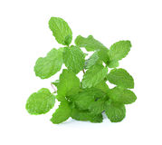 Fresh mint close up Royalty Free Stock Photos