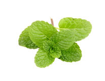 Fresh mint close up on white Royalty Free Stock Images