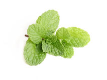 Fresh mint close up on white Royalty Free Stock Photography
