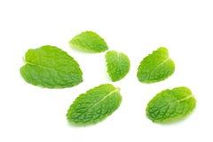 Fresh mint close up on white Stock Image