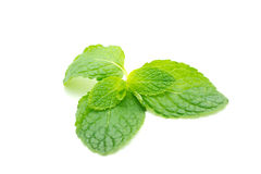 Fresh mint close up on white Stock Photo