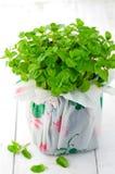Fresh mint Royalty Free Stock Photography