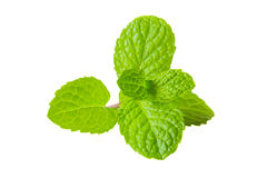 Fresh mint closeup white background Stock Images