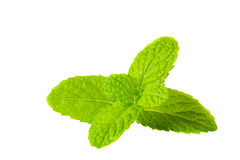 Fresh mint closeup on white background Royalty Free Stock Photography