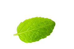 Fresh mint closeup on white Royalty Free Stock Photo