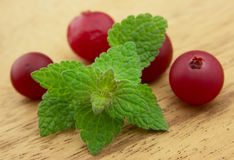 Fresh mint and cranberry Stock Photos