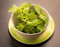 Fresh mint in a cup and saucer Royalty Free Stock Images