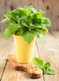 Fresh mint in cup Stock Photography