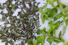 Fresh mint for drying and dry mint on a neutral gray background. Royalty Free Stock Photography