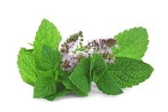 Fresh mint with flowers on background. Fresh mint with flowers on white background Royalty Free Stock Image
