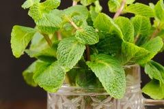 Fresh mint in glass mug on black background closeup macro Royalty Free Stock Image