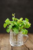 Fresh mint in glass mug on black background closeup macro Royalty Free Stock Photo