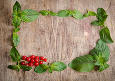 Fresh mint green frame with red currants Stock Photography