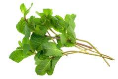 Fresh mint herb Royalty Free Stock Image