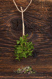 Fresh mint herb. Stock Images