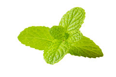 Fresh mint herb on isolated white Royalty Free Stock Photo