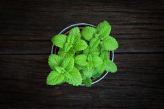 Fresh mint herb in a tin pot Stock Photo